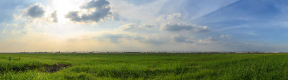 Panorama scene of green grass field with blue cloudy sky. Royalty Free Stock Photo