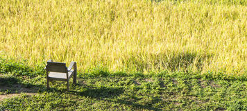 Panorama scene of Mae Klang Luang rice fied Chiang Mai, Thailand Royalty Free Stock Image