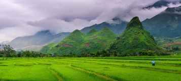 Panorama scene of rice fields and terrace on daylight sunshade a. T Sapa, Vietnam Royalty Free Stock Photography