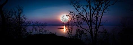 Panorama Schattenbilder des Holzes und des schönen Moonrise, helles fu Lizenzfreie Stockfotografie