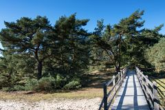 Panorama of the Schwanheimer dune landscape Royalty Free Stock Photo