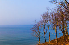 Panorama sea forest Stock Image