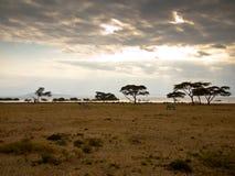 Panorama See Naivasha mit Zebras Stockbilder