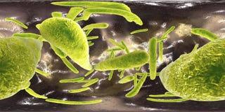 panorama sferico 360-degree del mycobacterium tuberculosis dei batteri fotografia stock