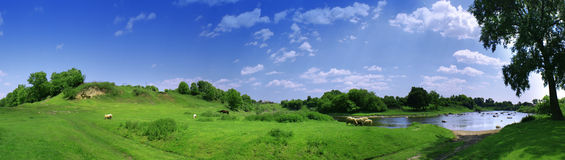 Panorama with sheeps Royalty Free Stock Photography