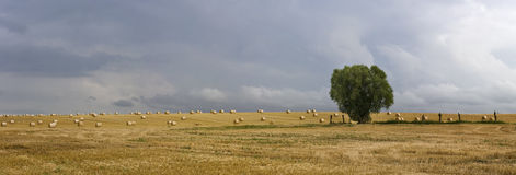 Panorama shot of a field with a tree Royalty Free Stock Photos
