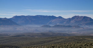 Panorama of Sierra Cazorla with Olive trees Stock Images