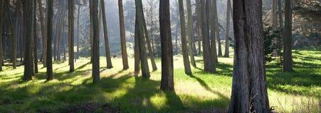 panorama- sikt för skog arkivfoto