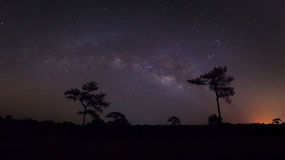 Panorama silhouette of pine tree with cloud and Milky Way. Long. Exposure photograph royalty free stock image