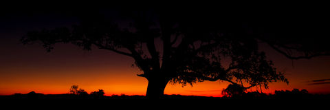 Panorama of a silhouette tree at dusk. Royalty Free Stock Photos