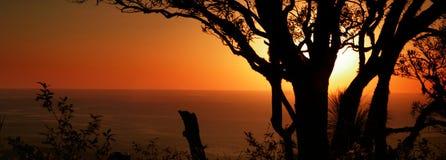 panorama- silhouettesolnedgångtrees Royaltyfri Foto