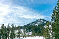Panorama of ski resort, slope, people on the lift, skiers on the track among the pines. stock image