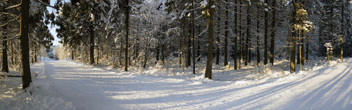 Panorama of ski track in Russian forest Royalty Free Stock Images