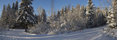 Panorama of ski track in Russian forest Royalty Free Stock Photos