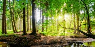 Panorama- skog arkivbild