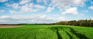Panorama of sky clouds and grass on meadow Royalty Free Stock Photo