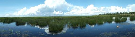 Panorama. Sky, water and aquatic plants stock photography