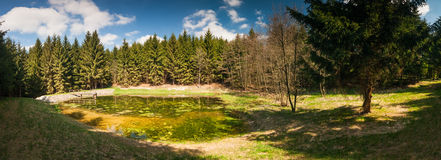 Panorama of small pond in the woods Royalty Free Stock Images