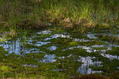 Panorama small river with reed on northern part of Ukraine, Sumy region. Riparian vegetation Salix sp. Flooded meadows Stock Photo