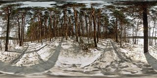 Panorama of snow-covered forest on a sunny day. Full 360 degree panorama in equirectangular equidistant spherical projection, stock images
