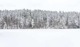 Panorama of snowy forest Stock Images