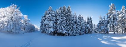 Panorama of a snowy forest with a picnic area. In winter Royalty Free Stock Photo