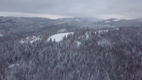Panorama of snowy landscape with mountains. Wonderful panoramic view from drone of mountain ranges with coniferous endless woods all covered with white frost in stock footage