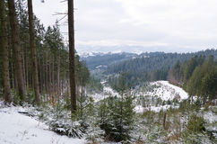 Panorama of snowy mountains and forest in a ski resort. Weather in the mountains. Stock Photo