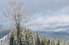 Panorama of snowy mountains and forest in a ski resort. Weather in the mountains. Stock Image