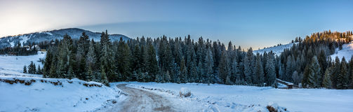 Panorama of snowy road through spruce forest in mountains royalty free stock photo
