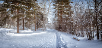 Panorama of snowy woods, road, Russia, Ural Stock Photo