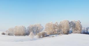 Panorama soleado del invierno con los árboles blancos Foto de archivo libre de regalías