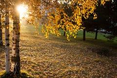Panorama soleado del parque del otoño imagen de archivo