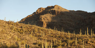 Panorama of sonoran desert Stock Photos