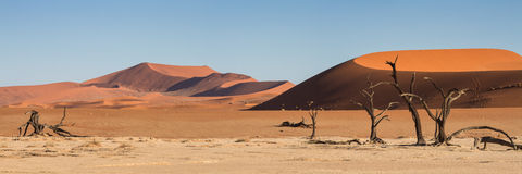 Panorama of the Sossusvlei Royalty Free Stock Photo