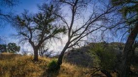 Panorama of Southern California Woods Stock Image