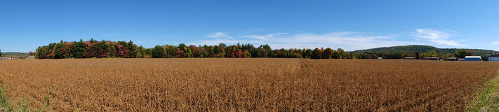 Panorama of Soybean Field Stock Images