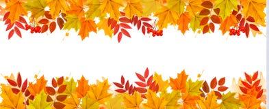 Panorama spadku jesieni liści Kolorowy tło