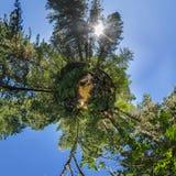 Panorama sphérique de la crique 360.180 dans un litt dense de vert forêt Image stock