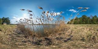 Panorama sphérique de plein hdri sans couture 360 degrés de vue d'angle sur des bosquets des roseaux près du lac large dans le jo images stock