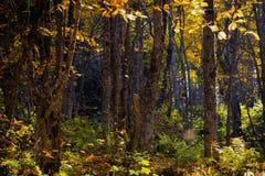 Panorama splendido del paesaggio di autunno di una foresta scenica con i lotti di sole caldo immagini stock