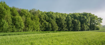 Panorama of spring field in village Royalty Free Stock Image