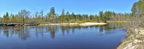 Panorama spring forest river. Stock Images