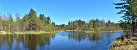 Panorama spring forest river. Royalty Free Stock Image