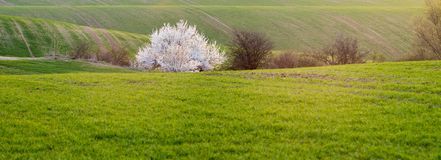 Panorama of spring, green field royalty free stock images