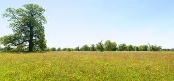 Panorama of spring meadow Stock Image