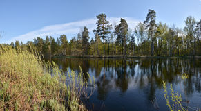 Panorama of the spring river. Royalty Free Stock Photo