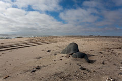 Panorama squelettique de côte Photographie stock libre de droits