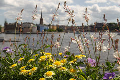 Panorama of Stockholm. Summer panorama of Stockholm, Sweden Stock Photos