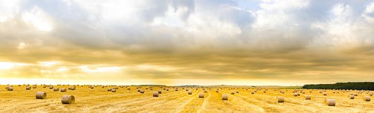 Panorama of straw bales on open field. Amazing panorama of straw bales on open field at sunrise golden hour Stock Photos